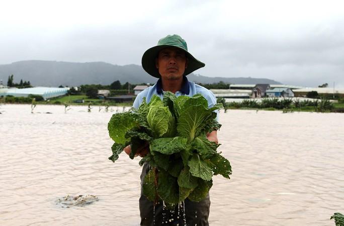 Giá rau củ quả Đà Lạt vẫn cao kỷ lục - Ảnh 1.