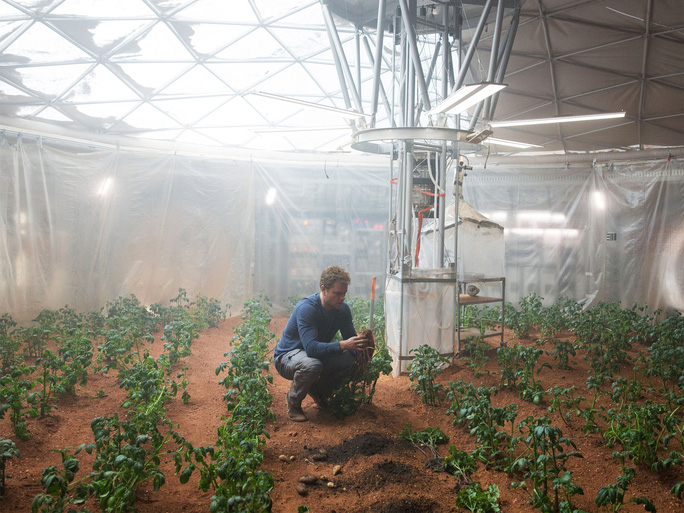 Rau quả phát triển tốt trên đất lấy từ sao Hỏa tại một cơ sở thí nghiệm ở Hà LanẢnh: THE INDEPENDENT