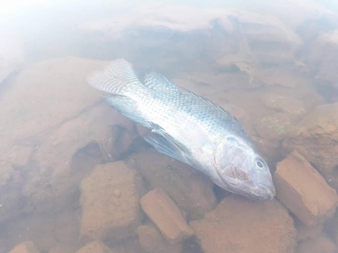 Sông Cu Đê tiếp tục đục ngầu kèm theo hiện tượng cá chết - Ảnh 1.