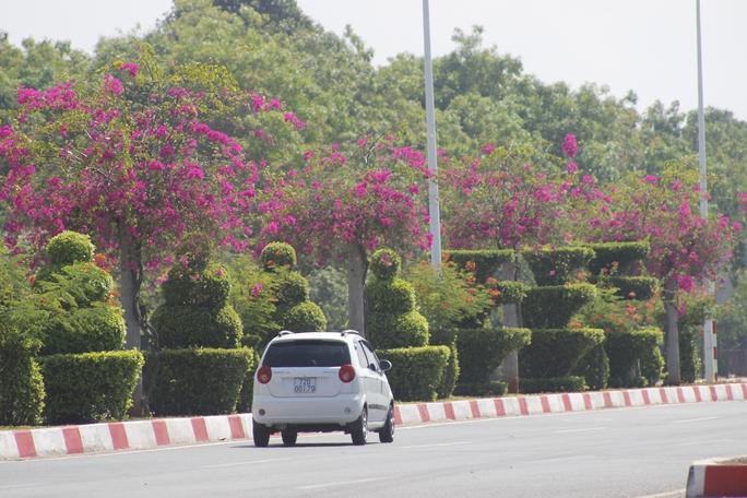 """Để di chuyển vào trung tâm TP Vũng Tàu, ngoài tuyến đường Võ Nguyên Giáp, du khách có thể chạy theo đường 2-9 (còn gọi đường 51B), đặc trưng là loài hoa giấy màu tím được trồng xen giữa những cây ngâu cắt tỉa tỉ mỉ, chắc chắn sẽ """"đốn tim"""" nhiều người."""