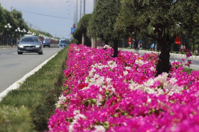 Đường được thiết kế với dải phân cách giữa trồng thảm hoa và cây dương cắt tỉa công phu. Trên vỉa hè, hai hàng cây Muồng hoàng yến được trồng thẳng tắp với những nhánh hoa màu vàng kiêu hãnh.