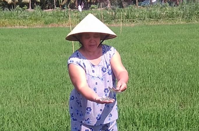 Miểng chai bị kẻ gian rải trong ruộng lúa của bà Trúc. Ảnh: Minh Hào