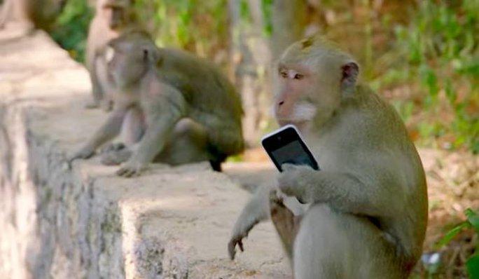 Bầy khỉ xã hội đen trên đảo Bali - Ảnh 1.