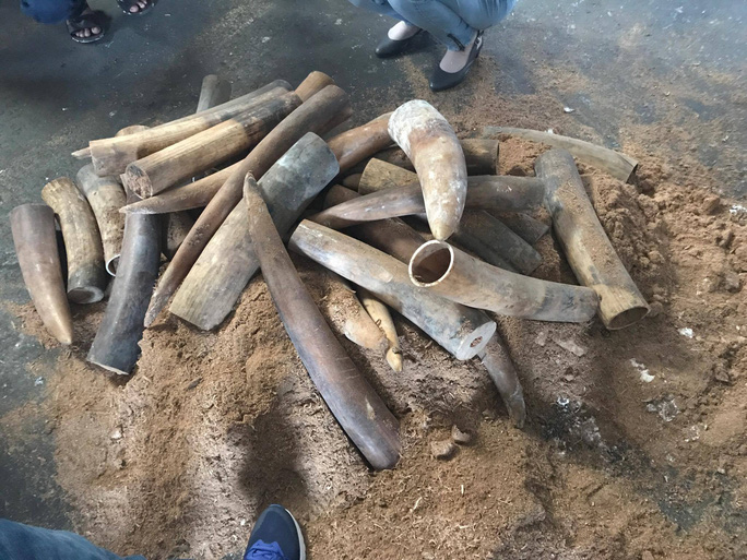 Khởi tố hình sự vụ buôn lậu ngà voi tại cảng Cát Lái - Ảnh 1.