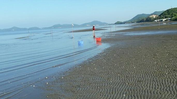 Vụ hải sản chết bất thường: Có hiện tượng tảo nở hoa - Ảnh 1.