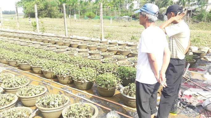 Thủ phủ hoa tết Quảng Ngãi và Quảng Nam tiêu điều sau lũ dữ - Ảnh 11.