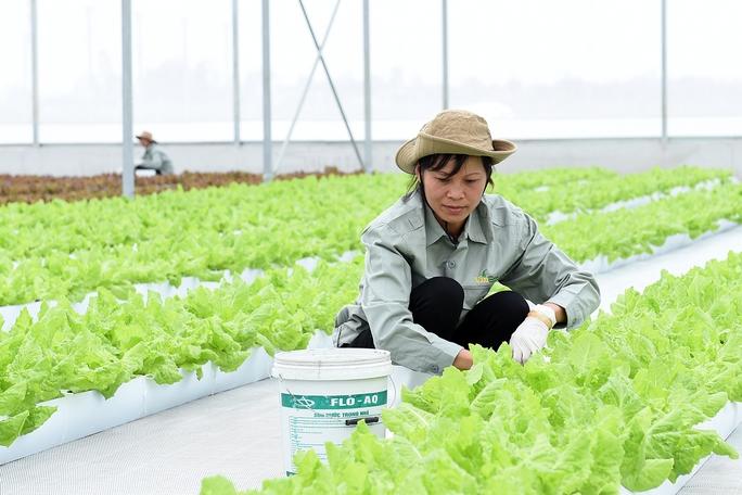 Trên khu đất sản xuất với diện tích gần 130 ha, VinEco Hà Nam sẽ triển khai khoảng 15 sản phẩm chủ lực phục vụ thị trường trong nước và xuất khẩu