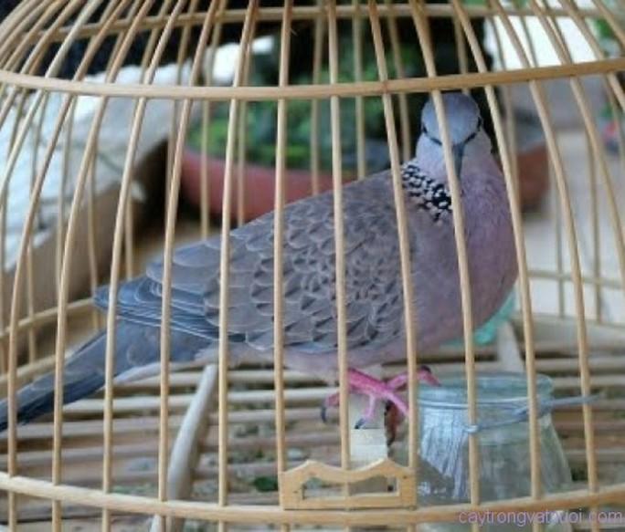 Mang thuốc độc đến nhà dọa rồi xin đểu 2 con chim để đòi nợ - Ảnh 1.