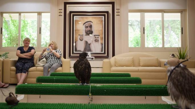 Phòng chờ của bệnh viện Chim ưng Abu Dhabi. Ảnh: Nwptv
