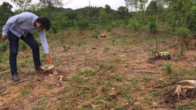 Rừng thông đặc dụng  ở thành phố bị biến mất giữa ban ngày - Ảnh 4.