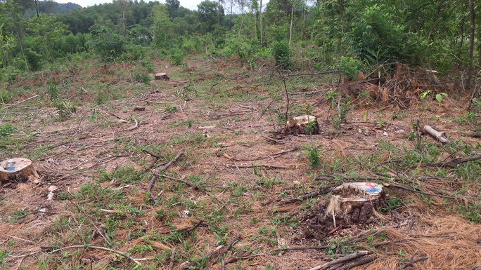 Rừng thông đặc dụng  ở thành phố bị biến mất giữa ban ngày - Ảnh 3.