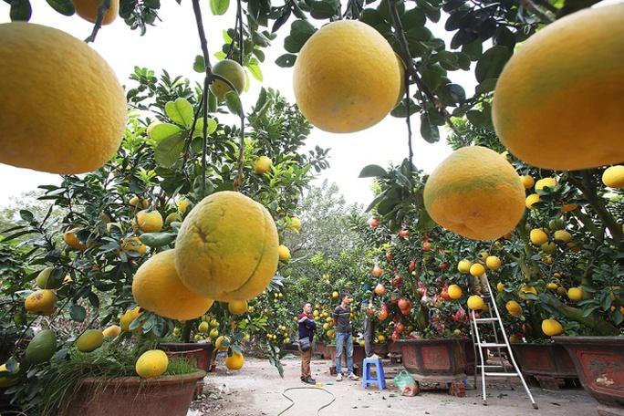 Anh Tư theo nghề trồng hoa, quất, cam canh, bưởi từ bé, đến năm 2008 anh học được cách cấy ghép, tạo dáng cho cây bưởi Diễn. Những năm gần đây, mỗi vụ bưởi dịp Tết cho doanh thu cả tỉ đồng.
