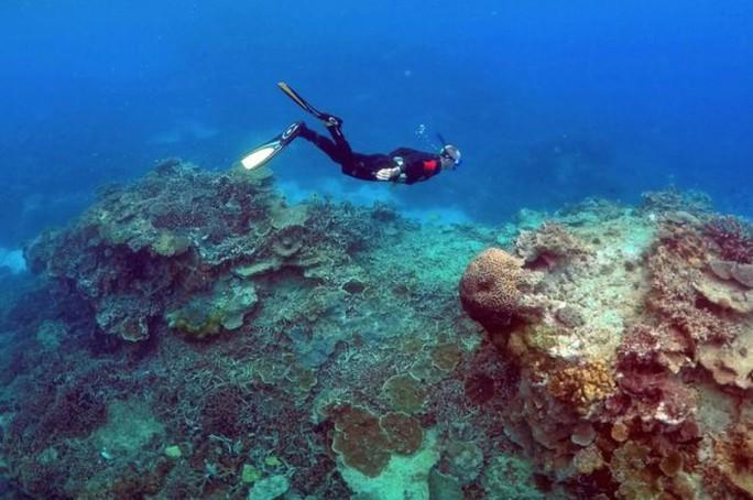 Người thợ lặn bị tấn công khi đang lặn ở độ sâu 15 m. Ảnh: Reuters
