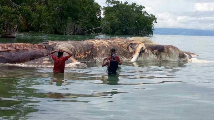 """Giải mã """"quái vật biển"""" dạt vào bãi biển Indonesia - Ảnh 1."""
