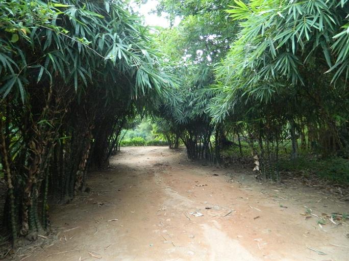 Khu rừng tre của vị ẩn sĩ núi Sơn Trà - Ảnh 2.