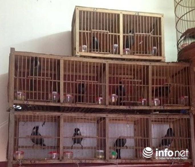 Lạ lùng chuyện mua chim trên cây ở Quảng Bình - Ảnh 1.