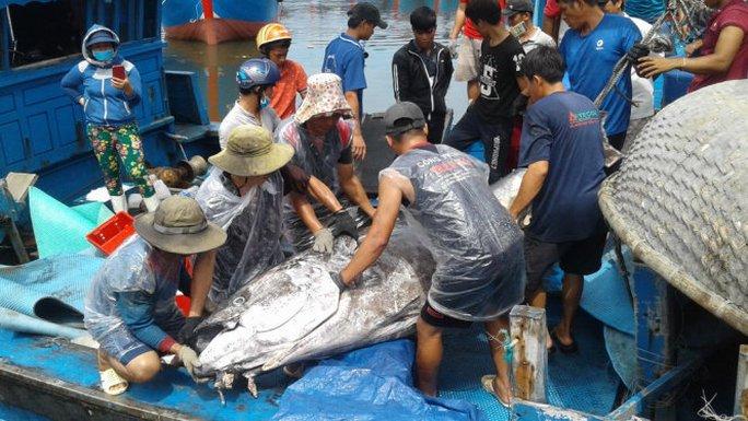 Ngư dân Bình Định câu dính cá ngừ khủng nặng 280kg - Ảnh 1.