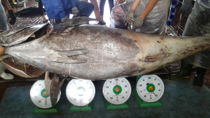 Ngư dân Bình Định câu dính cá ngừ khủng nặng 280kg - Ảnh 2.