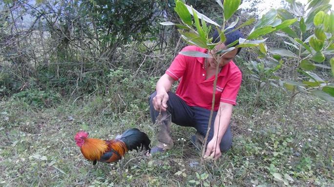 Tận mắt chứng kiến độc chiêu săn gà rừng xứ Nghệ - Ảnh 1.