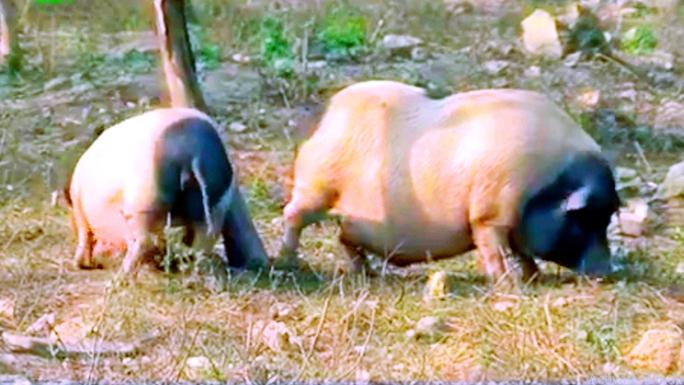 Thơm lừng, lạ miệng thịt lợn hương - Ảnh 2.