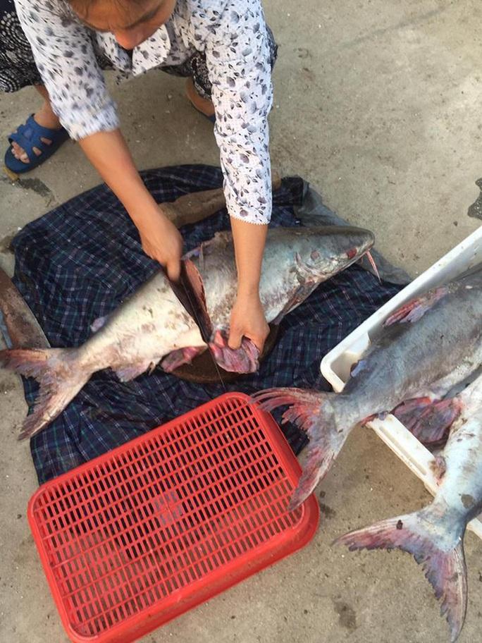 Tiết lộ sốc của một chủ hàng chuyên bán cá thu - Ảnh 2.