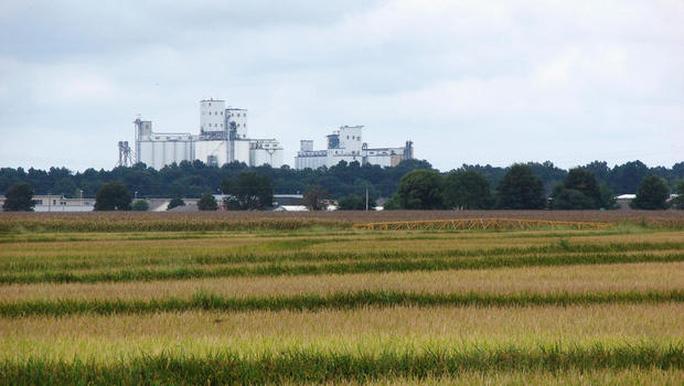 Mỹ lần đầu xuất gạo sang Trung Quốc  - Ảnh 1.