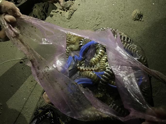 Vua nhí câu tôm tích trên bãi biển Vũng Tàu - Ảnh 1.