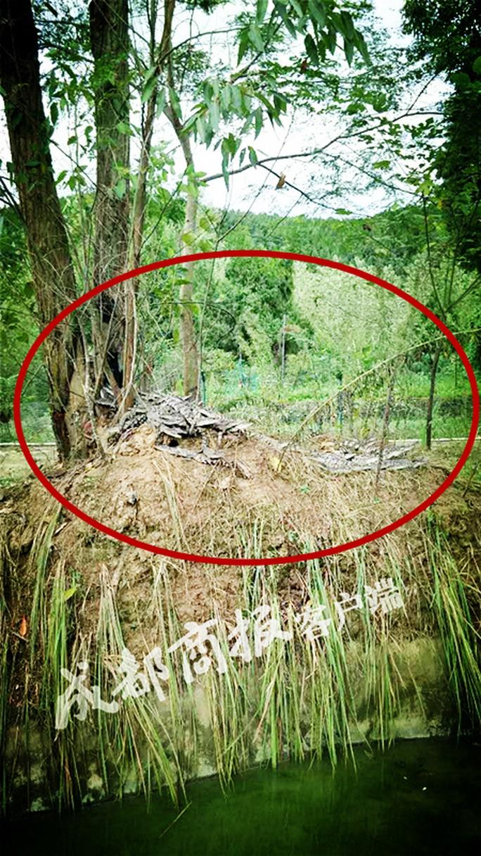 Gần 80 cá sấu trốn trại, dân Trung Quốc sống trong sợ hãi - Ảnh 1.