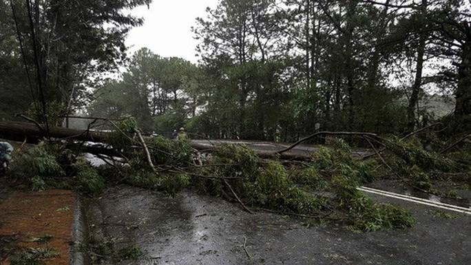 Lâm Đồng: 2 người chết, nhiều nơi bị cô lập do bão - Ảnh 15.