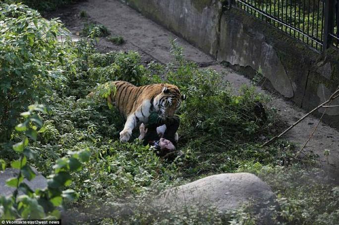 Hổ tấn công nhân viên sở thú trước mắt du khách - Ảnh 2.
