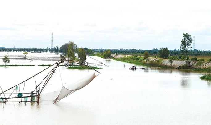 Miền Tây rộn ràng mùa cá về sông - Ảnh 1.