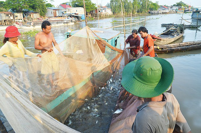 Miền Tây rộn ràng mùa cá về sông - Ảnh 2.
