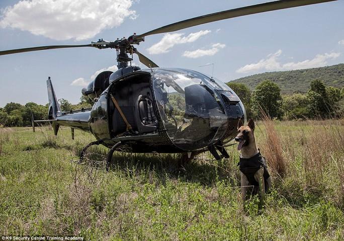 Độc đáo những chú chó anh hùng nhảy dù cứu voi - Ảnh 8.