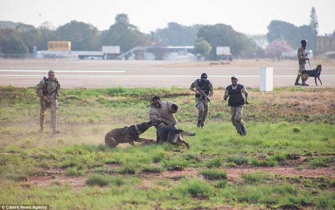 Độc đáo những chú chó anh hùng nhảy dù cứu voi - Ảnh 6.