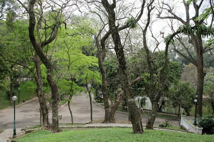 Hiện nay tại công viên Bách Thảo có khoảng 40 cây sưa đỏ, trong đó cây có đường kính lớn nhất khoảng 75cm, nhỏ nhất khoảng trên 10cm.