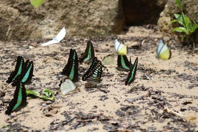 Mê hồn thiên đường bướm ở Đắk Lắk - Ảnh 4.