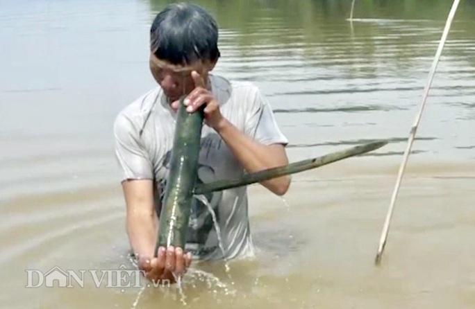 Cuối mùa săn cá bống ở đáy sông Trà Khúc - Ảnh 4.