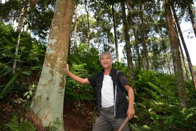 Có một rừng quế thiêng, thu hơn 500 tỉ mỗi năm - Ảnh 5.