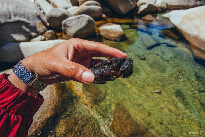 Sướng mắt với biển, đá và cua ở cù Lao Câu - Ảnh 17.