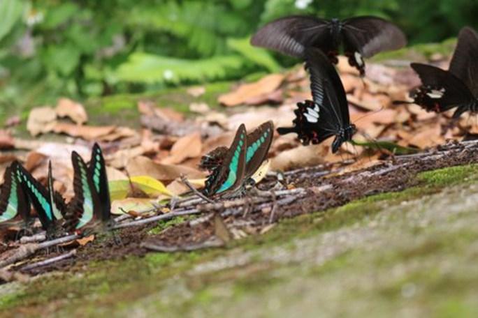 Mê hồn thiên đường bướm ở Đắk Lắk - Ảnh 6.
