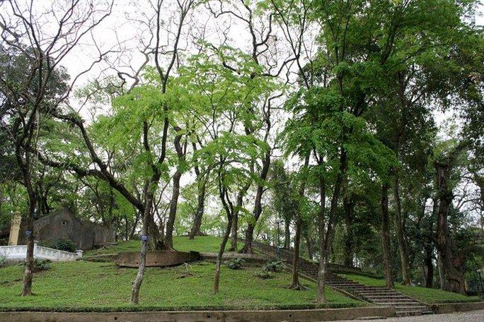 """Núi Nùng nằm trong công viên Bách Thảo (Hà Nội) được mệnh danh là núi """"triệu đô"""" bởi trên ngọn núi này là một quần thể gồm hàng chục cây sưa đỏ quý hiếm có giá bạc tỷ."""