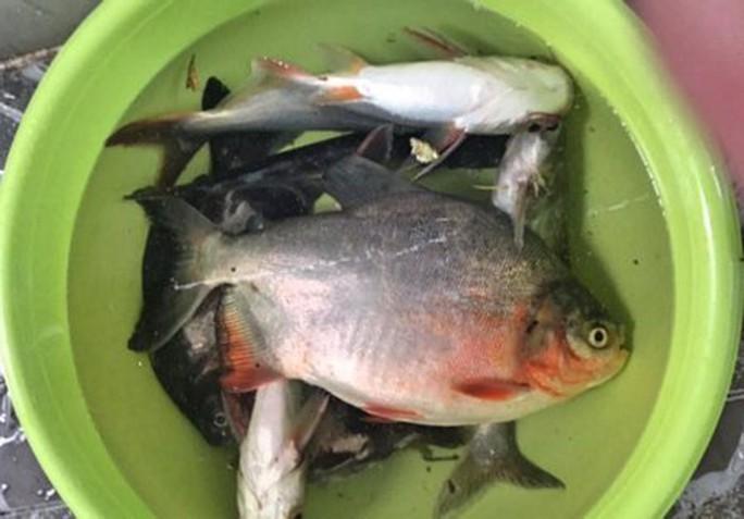 Đổ xô về sông Rạch Bàng câu cá - Ảnh 3.