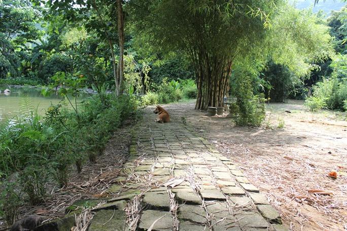 Khu rừng tre của vị ẩn sĩ núi Sơn Trà - Ảnh 3.