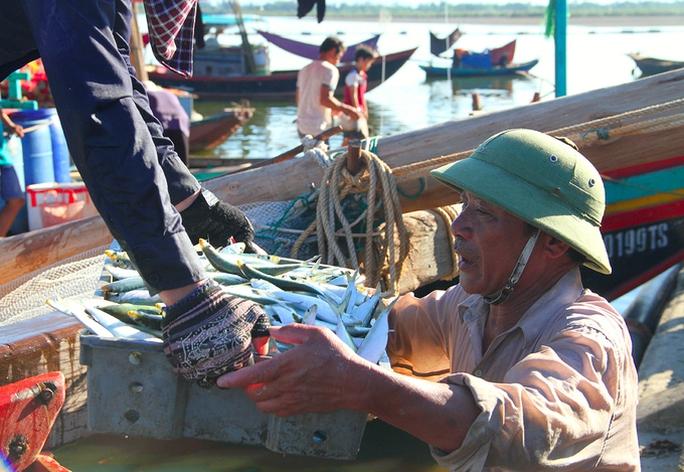 Ngư dân Hà Tĩnh thỏa sức bắt cá trích - Ảnh 3.