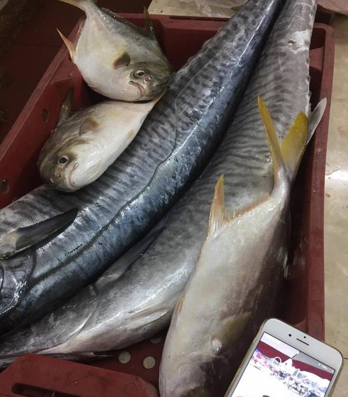 Tiết lộ sốc của một chủ hàng chuyên bán cá thu - Ảnh 3.