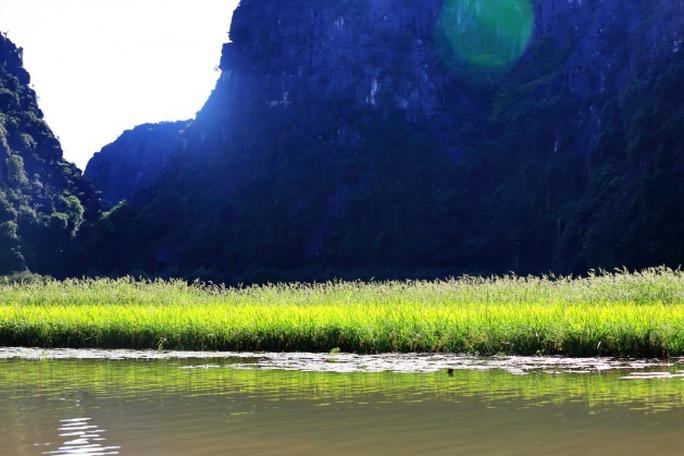 Ngỡ ngàng mùa lúa chín như tranh vẽ ở Tam Cốc - Ảnh 10.