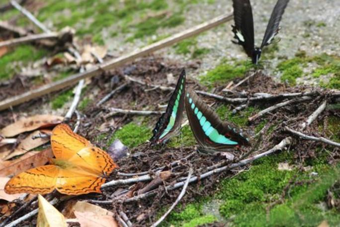 Mê hồn thiên đường bướm ở Đắk Lắk - Ảnh 9.