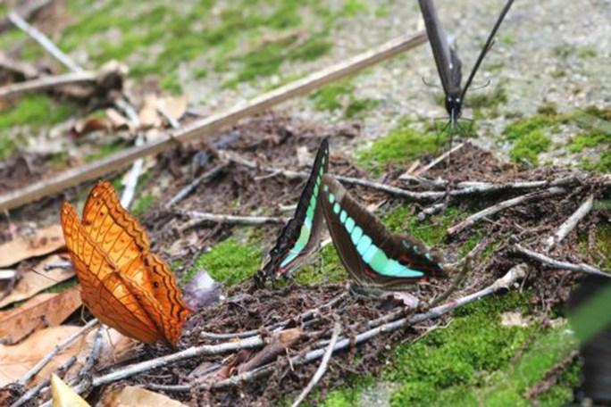 Mê hồn thiên đường bướm ở Đắk Lắk - Ảnh 10.