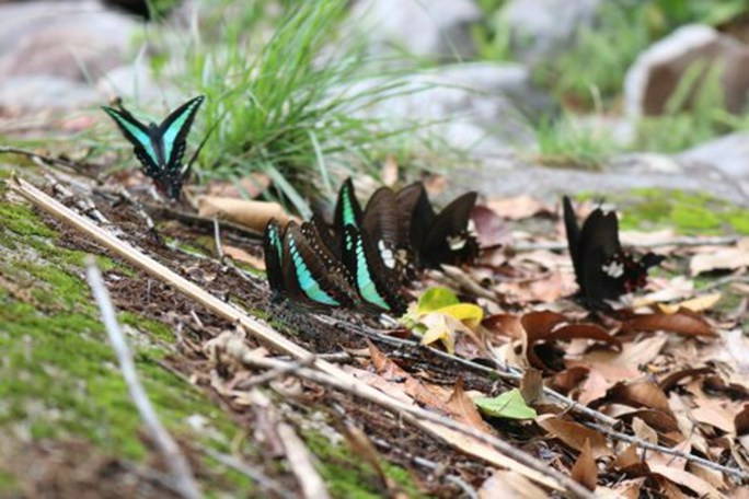 Mê hồn thiên đường bướm ở Đắk Lắk - Ảnh 12.