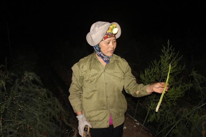 Bà Ngát đang cầm trên tay cây măng tây đủ yêu cầu đạt loại I